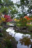 紅葉飄飄15日東京自由行--清澄庭園:39●有那麼一絲像童話森林的畫面.JPG