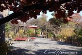 紅葉飄飄15日東京自由行--雖滿園蕭瑟卻也難掩風雅的向島百花園:17●初秋;會在此處舉辦「胡枝子祭」,朗讀以「胡枝子花」為題材的俳句、和歌,還有日本傳統音樂的表演與茶會、志