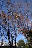 ●一歲一枯榮,向島百花園內的草木只是蓄勢待發,並非死去:DSC08202.JPG