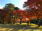 殿ヶ谷戸庭園的深秋楓葉,如火如荼、如烈燄灼燒一般無窮盡的美麗:05.JPG