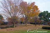 紅葉飄飄15日東京自由行--國營昭和紀念公園:35●秋天的景色,這是四季分明的過度才能享有的極緻體驗.JPG