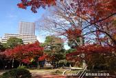 紅葉飄飄15日東京自由行--殿ヶ谷戸庭園:24●高低錯落的崖間,種植了赤松、楓樹與竹,顯現了多重生態下相互輝映的美貌.JPG