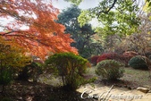 紅葉飄飄15日東京自由行--我在小石川植物園:05●朝著指標方向,踏著石階,穿過與上半場風情截然不同的林蔭,前往日式庭園.JPG