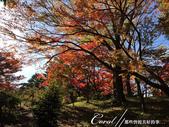 紅葉飄飄15日東京自由行--殿ヶ谷戸庭園:28●深秋楓葉,如火如荼、如烈燄灼燒一般無窮盡的美麗.JPG
