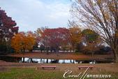 紅葉飄飄15日東京自由行--國營昭和紀念公園:36●秋天的景色,這是四季分明的過度才能享有的極緻體驗.JPG