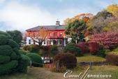 紅葉飄飄15日東京自由行--我在小石川植物園:18●紅白相間的西式建築物曾是建於明治9年的舊東京醫學校的本館.JPG
