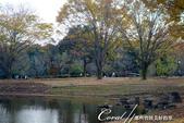 紅葉飄飄15日東京自由行--國營昭和紀念公園:42●很快地;藍天收起它的顏色,光線也漸暗下來.JPG
