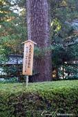 紅葉飄飄15日東京自由行--聚集正能量的香取神宮之旅:29●境內有一株天皇親手種下的松樹,非常高大01.JPG