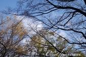 紅葉飄飄15日東京自由行--閃耀著童話森林般迷人色彩的小石川植物園:17●相傳這座植物園的前身是1684年由江戶幕府建造的「小石川御藥園」.JPG