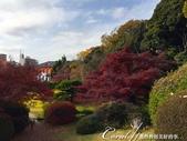 紅葉飄飄15日東京自由行--我在小石川植物園:32●池塘裡也少不了逢人經過必定張嘴討吃的肥大鯉魚.JPG