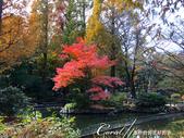 紅葉飄飄15日東京自由行--井之頭恩賜公園:38●這是如同城市綠洲一般存在的美麗公園.JPG