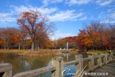 紅葉飄飄15日東京自由行--代代木公園:21●沿著噴水池漫走,每個角度都有超越想像的夢幻美景.JPG
