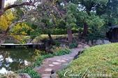 紅葉飄飄15日東京自由行--清澄庭園內的奇石及渡池石塊:04.JPG