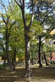 紅葉飄飄15日東京自由行--日比谷公園 :20●充滿自然靈性的公園,難以用言語形容的美麗.JPG