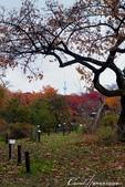 紅葉飄飄15日東京自由行--我在小石川植物園:46●在日本庭園的區塊內,各異奇趣的小徑也特別多,隨意走走,也有不同風光.JPG