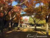 紅葉飄飄15日東京自由行--殿ヶ谷戸庭園:33●前景是楓紅,背景是藍天的好風光.JPG