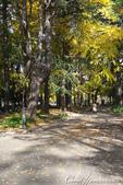 紅葉飄飄15日東京自由行--日比谷公園 :22●充滿自然靈性的公園,難以用言語形容的美麗.JPG