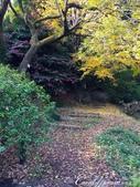 紅葉飄飄15日東京自由行--我在小石川植物園:47●在日本庭園的區塊內,各異奇趣的小徑也特別多,隨意走走,也有不同風光.JPG