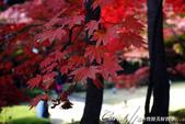 紅葉飄飄15日東京自由行--大田黑公園:15●秋的紅葉,將池畔點綴到近乎夢幻的境界.JPG