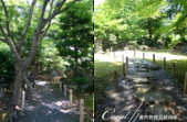 初夏14日自由行--春風吹又生的名古屋城:●公園內依時序盛開的花朵,多少撫平了名古屋城因戰爭受創的遺憾,成為居民散步休閒的空間03.png