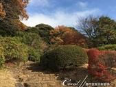 紅葉飄飄15日東京自由行--我在小石川植物園:28●當然,欣賞美麗的風景一定少不了沿著池子漫步一圈.JPG