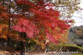 紅葉飄飄15日東京自由行--寶登山尋寶趣:58●深秋的楓紅華麗的為群山上色.JPG