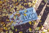 紅葉飄飄15日東京自由行--大学通り:18●每一百公尺都會有這特色步道磁磚.JPG