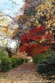 紅葉飄飄15日東京自由行--閃耀著童話森林般迷人色彩的小石川植物園:10●決定先跳過,像似通往秘境一般的深長小徑.JPG