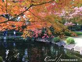大田黑公園內的美麗楓情畫:IMG_2905.JPG