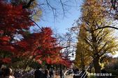 紅葉飄飄15日東京自由行--大学通り:05●這條人來人往的大道上,灑滿一地銀杏,一股腦兒接受楓紅洗禮的同時,幾乎忘了黃澄澄的銀杏也是秋的代表性植物.
