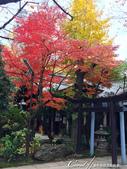 紅葉飄飄15日東京自由行--愛宕神社:14●小小神社內的秋之意境.JPG