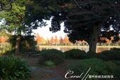 紅葉飄飄15日東京自由行--水光雲影、秋色無邊的水元公園:10●累了;坐下歇息,累了;坐下歇息,林間的氣氛令人感到恬靜舒適,彷彿時光靜止一般01.JPG