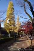紅葉飄飄15日東京自由行--大学通り:01●走在以文教區著稱的大道上,連路燈也顯得詩意.JPG