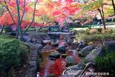 大田黑公園內的美麗楓情畫:DSC06913.JPG