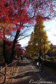 紅葉飄飄15日東京自由行--大学通り:09●落葉、紅磚道與自行車,果然是文教區標準的視覺印象.JPG