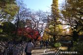 紅葉飄飄15日東京自由行--大学通り:04●這條人來人往的大道上,灑滿一地銀杏,一股腦兒接受楓紅洗禮的同時,幾乎忘了黃澄澄的銀杏也是秋的代表性植物.