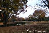 紅葉飄飄15日東京自由行--國營昭和紀念公園:41●很快地;藍天收起它的顏色,光線也漸暗下來.JPG