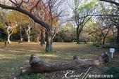 紅葉飄飄15日東京自由行--閃耀著童話森林般迷人色彩的小石川植物園:36●就在經過飲食區後,在草皮上遇到了一棵斷掉的樹.JPG