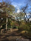 紅葉飄飄15日東京自由行--井之頭恩賜公園:40●這是如同城市綠洲一般存在的美麗公園.JPG
