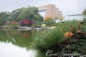 紅葉飄飄15日東京自由行--清澄庭園一眼看不完的池畔風情:12.JPG