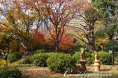 紅葉飄飄15日東京自由行--日比谷公園之美不勝收雲形池:●東京都心內一座不必人擠人的大公園.JPG