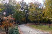 紅葉飄飄15日東京自由行--井之頭恩賜公園:03●悠靜的散步道,是拜訪公園的第一印象.JPG