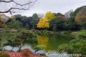 紅葉飄飄15日東京自由行--清澄庭園:29●欣賞池中的魚、水上的鴨和倒映在水中的樹,是來此庭園的一大樂事08.JPG
