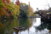 紅葉飄飄15日東京自由行--井之頭恩賜公園:04●接著,沿井の頭池尋找紅葉美景.JPG