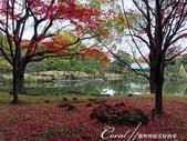 紅葉飄飄15日東京自由行--清澄庭園斑瀾的秋色:01.JPG