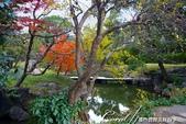 紅葉飄飄15日東京自由行--清澄庭園:40●有那麼一絲像童話森林的畫面.JPG