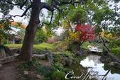紅葉飄飄15日東京自由行--清澄庭園斑瀾的秋色:02.JPG