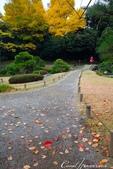 紅葉飄飄15日東京自由行--清澄庭園:42●滿地繽紛落葉,帶來秋的逸趣.JPG