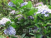 20090623陽明山二子坪:IMG_5674.jpg