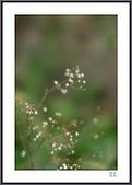 花花樹界:輕柔